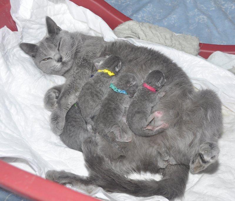 jaca chatons